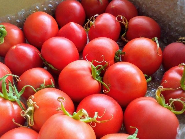 焼津蓬来温泉トマト