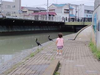 小石川にいた鵜二羽の画像